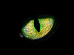 1028570_panther_eye