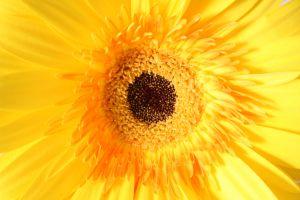 1028724_flower_yellow