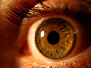1221586_eye