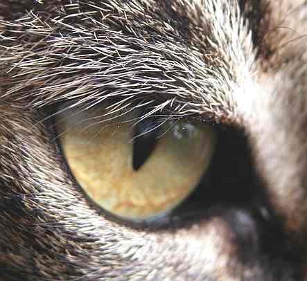 cat_eye_close_up
